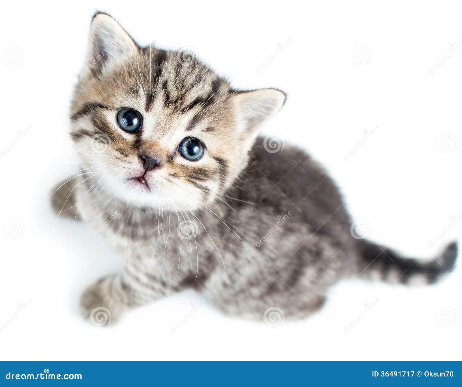 Cat Tail Upwards