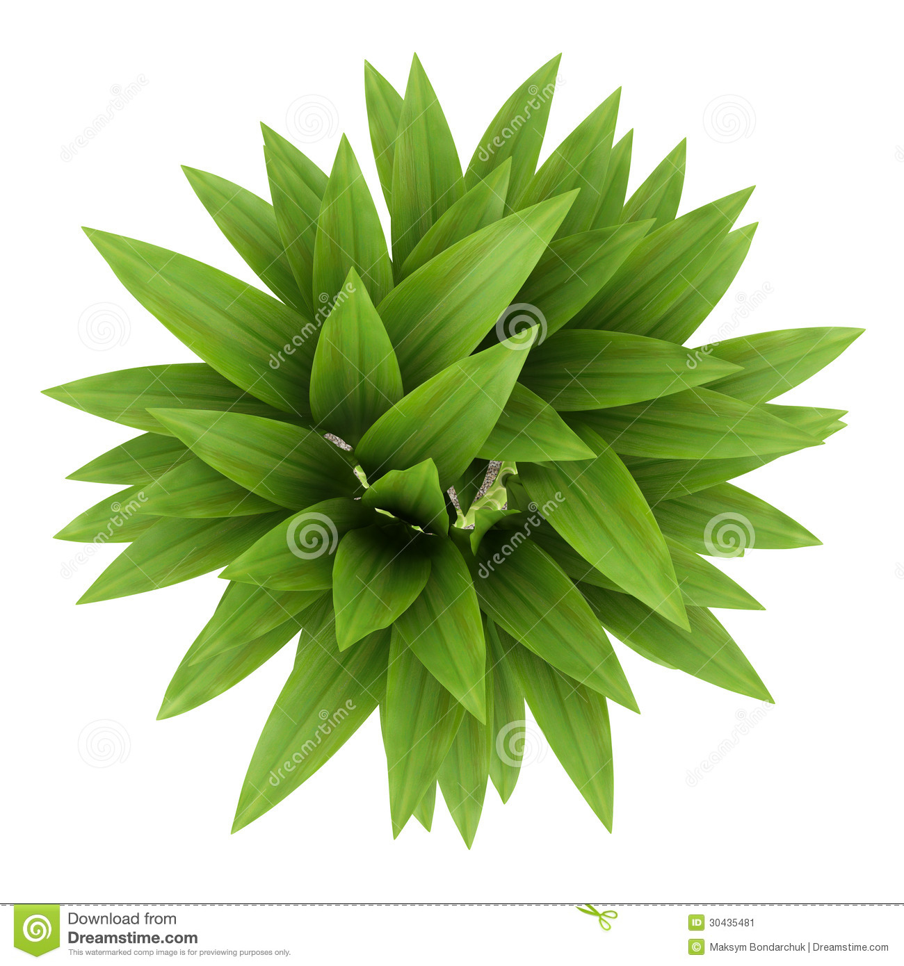 Top view of bamboo plant in pot isolated on white stock image image