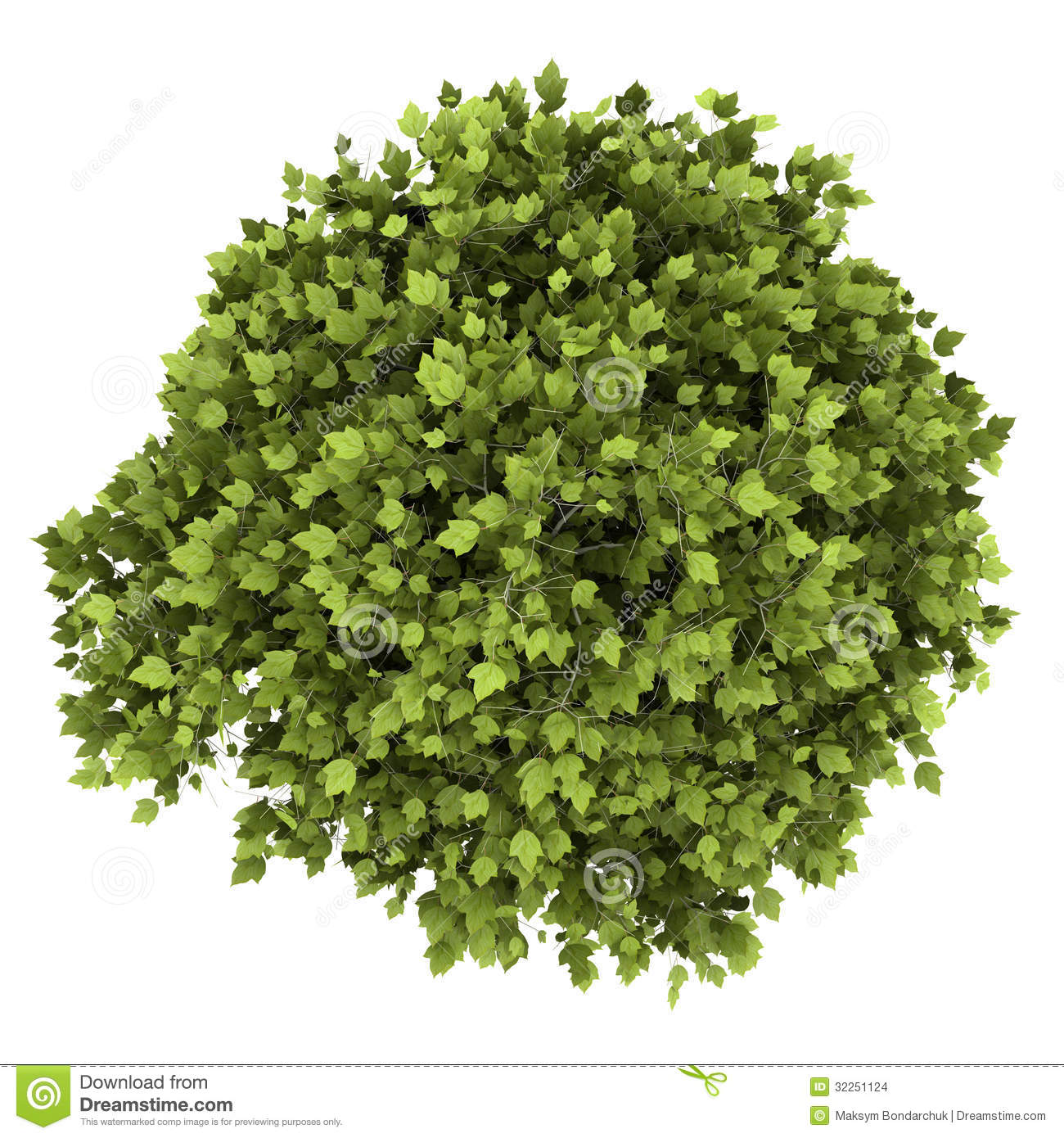 Top View Of Bonsai Plant In Pot Isolated On White Stock Illustration