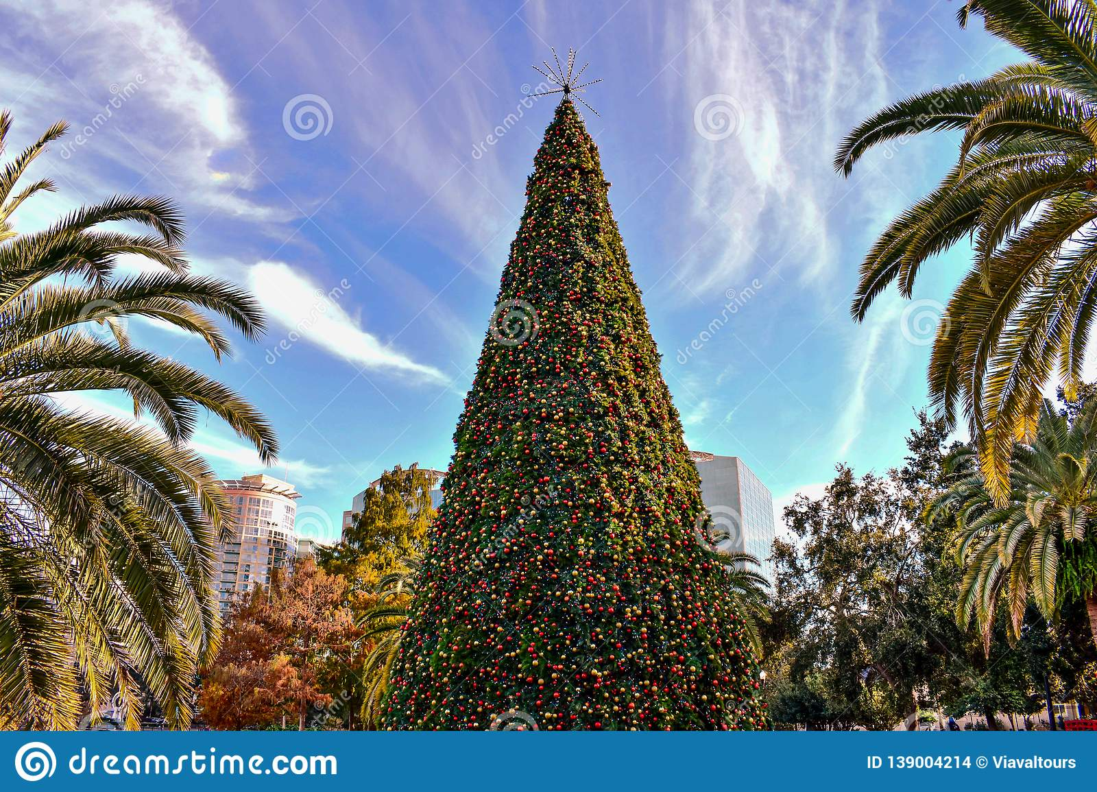 Top View Of Christmas Tree And Palm Trees In Lake Eola ...