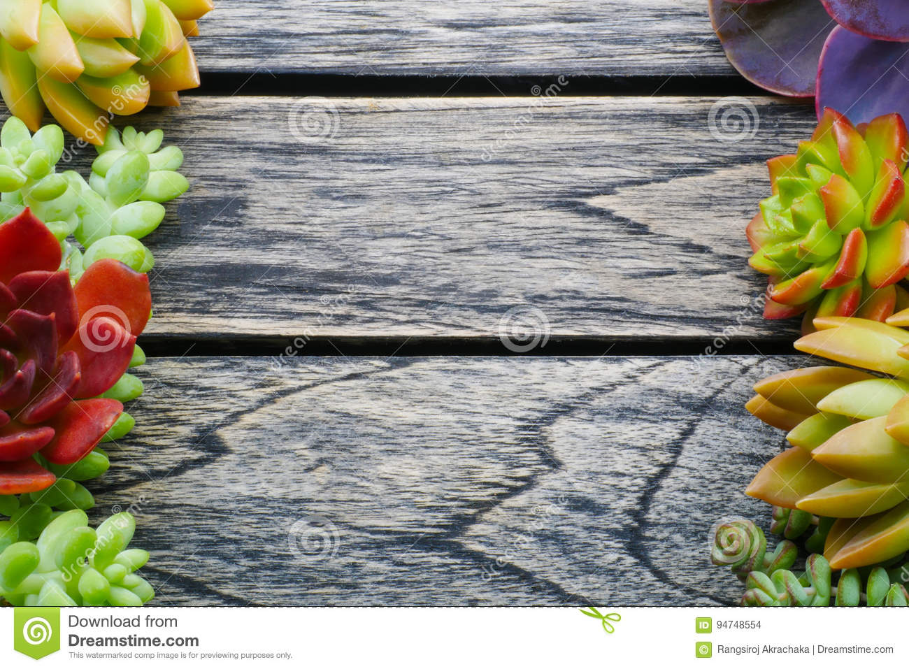 Top view cute colorful succulent plant with copy space for text