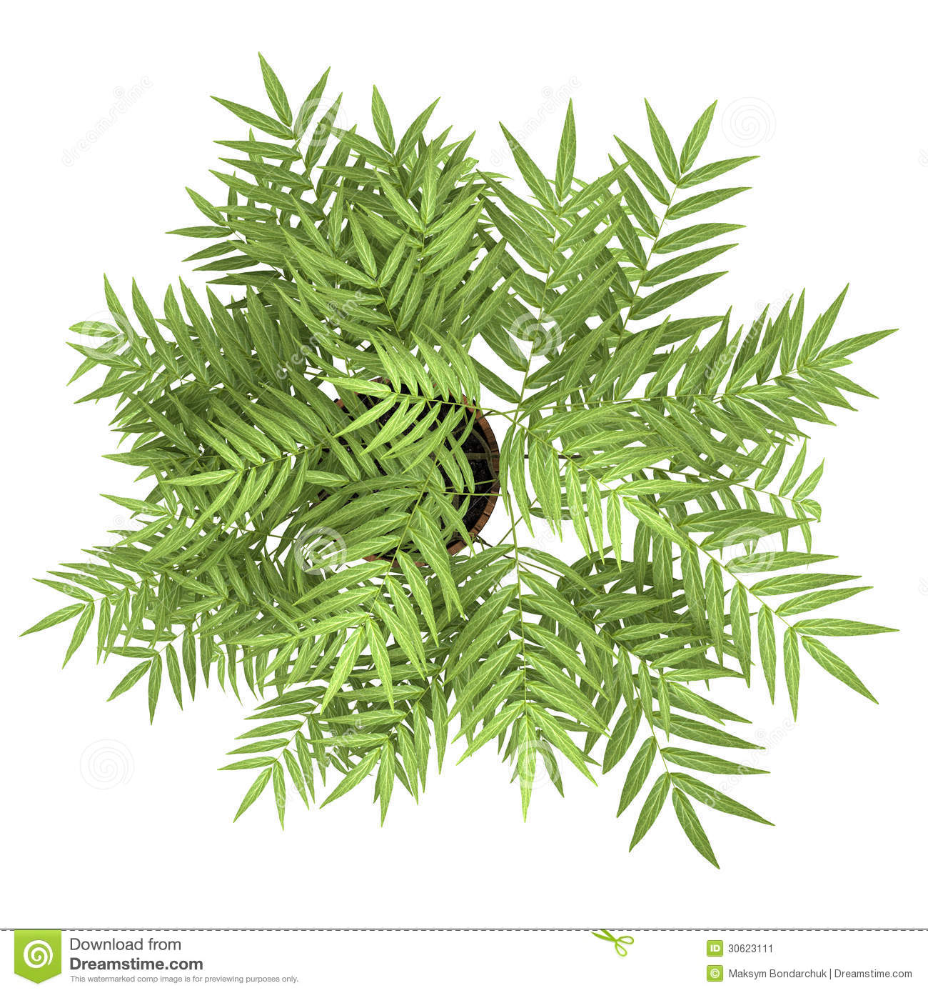 Top View Of Decorative Tree In Pot Isolated On White Stock Illustration Image 30623111
