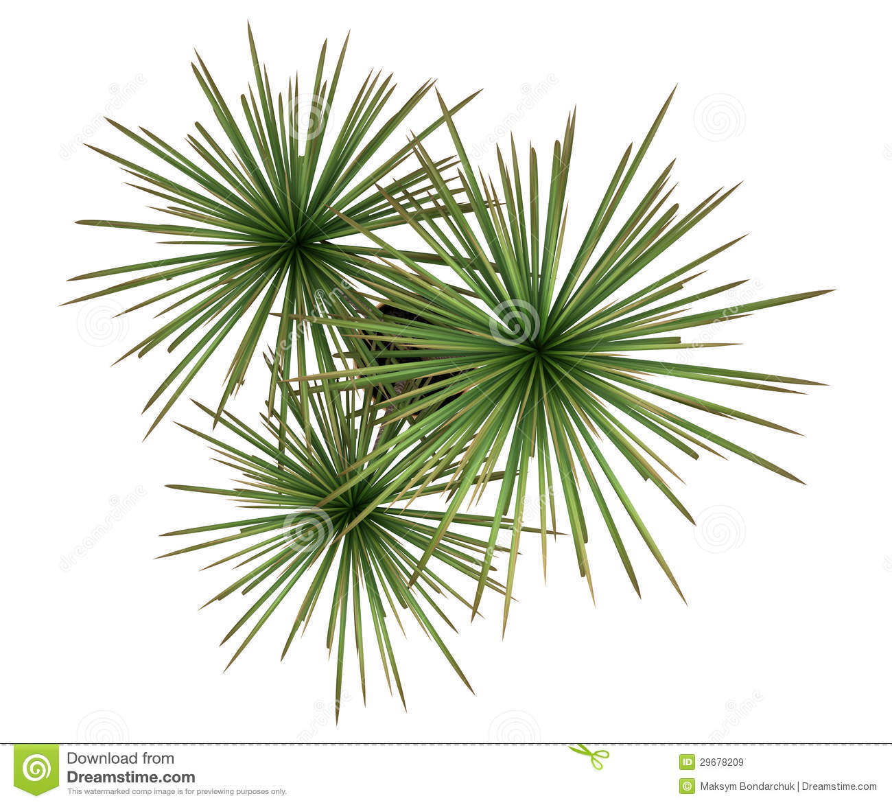 Top View Of Dracaena Plant In Pot Isolated On White Stock