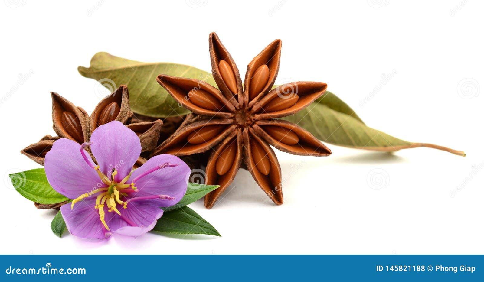 Dry star anise fruit.
