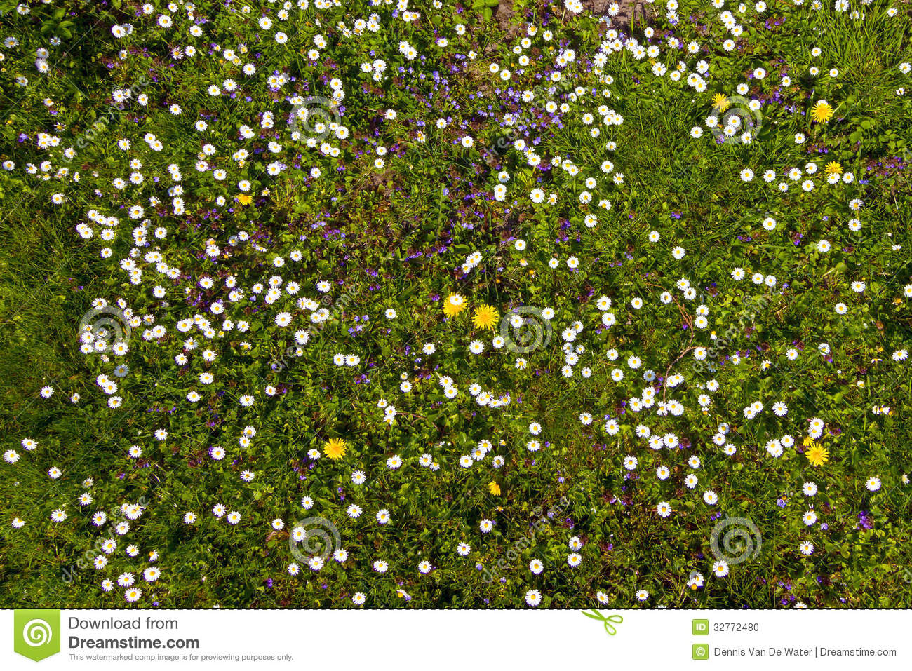 Spring View Flowers Images Flower Decoration Ideas