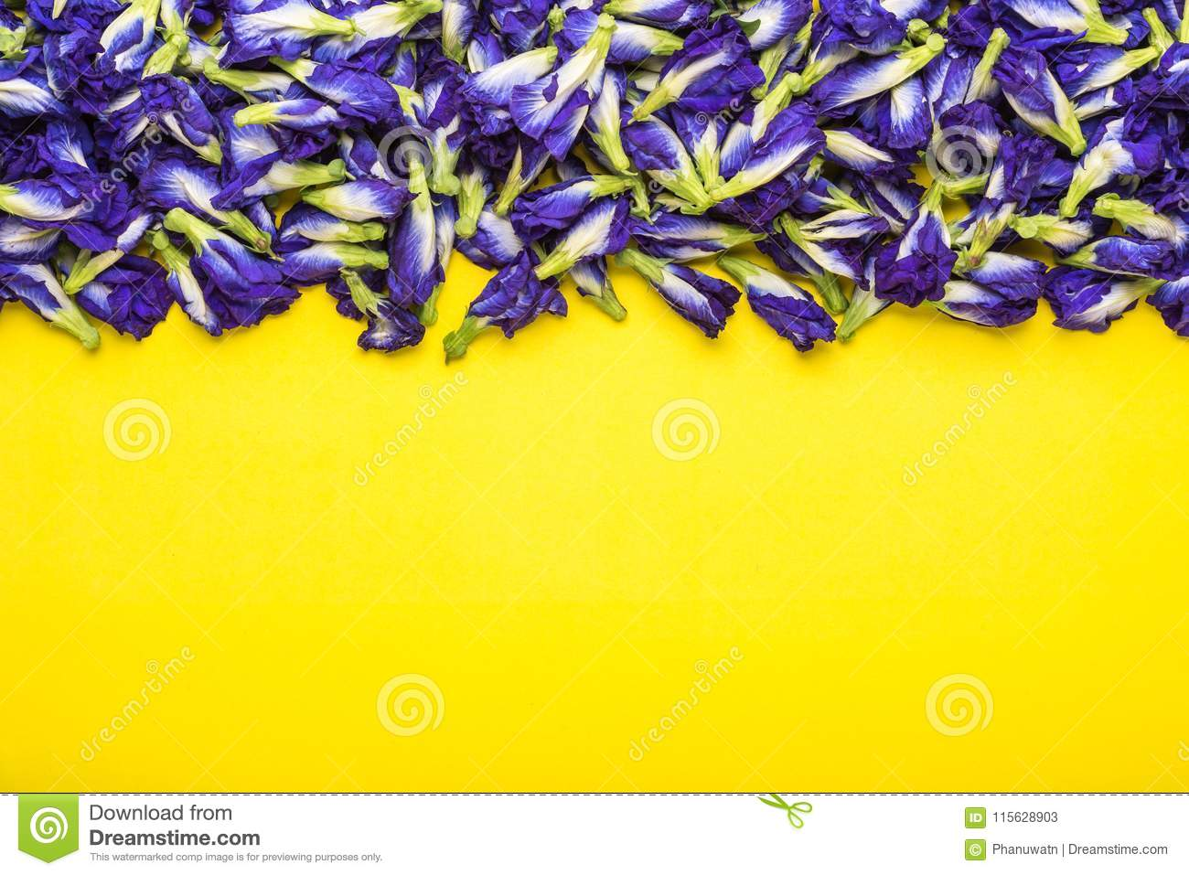 Fresh Purple Butterfly Pea Flower On Yellow Background Food Or