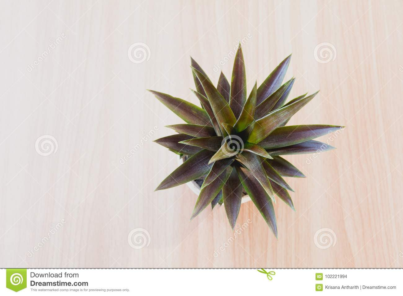 Top view green potted plant, trees in the pot on wooden table