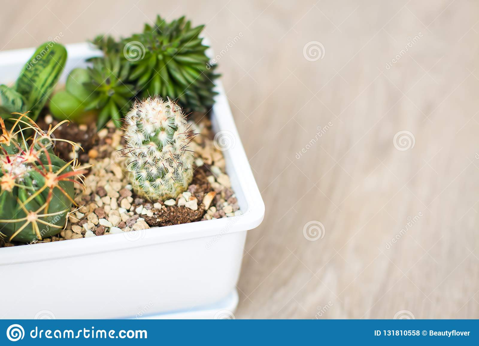 Top view house plants with cactus and succulents in white pot unique indoor plant decor