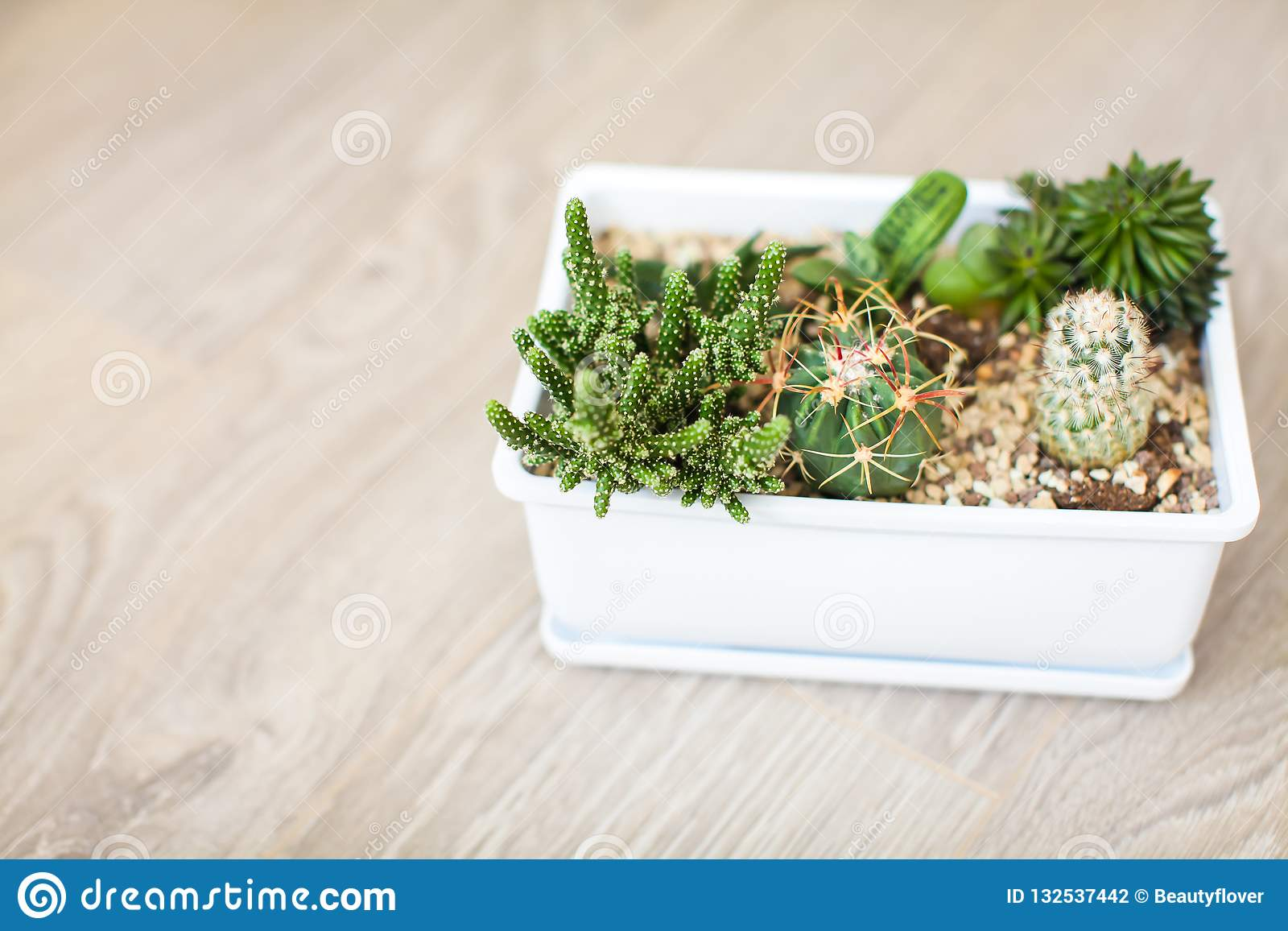 Top View House Plants With Cactus And Succulents In White Pot Unique Indoor Plant Decor Stock Photo Image Of Botany Growth 132537442