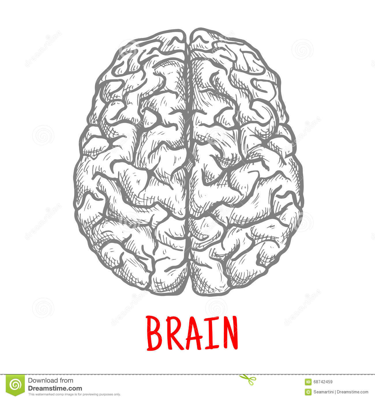 Top View Of Human Brain Sketch Style Stock Vector Illustration Of