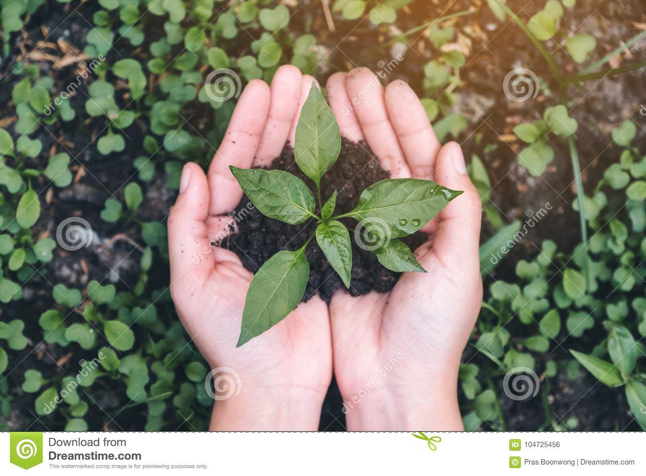 Top view image of hands holding soil and small tree to glow
