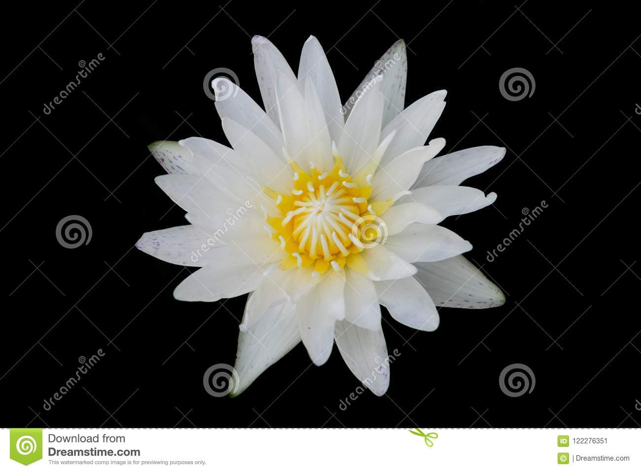 Top view of lotus flower stock image image of black 122276351 download top view of lotus flower stock image image of black 122276351 izmirmasajfo