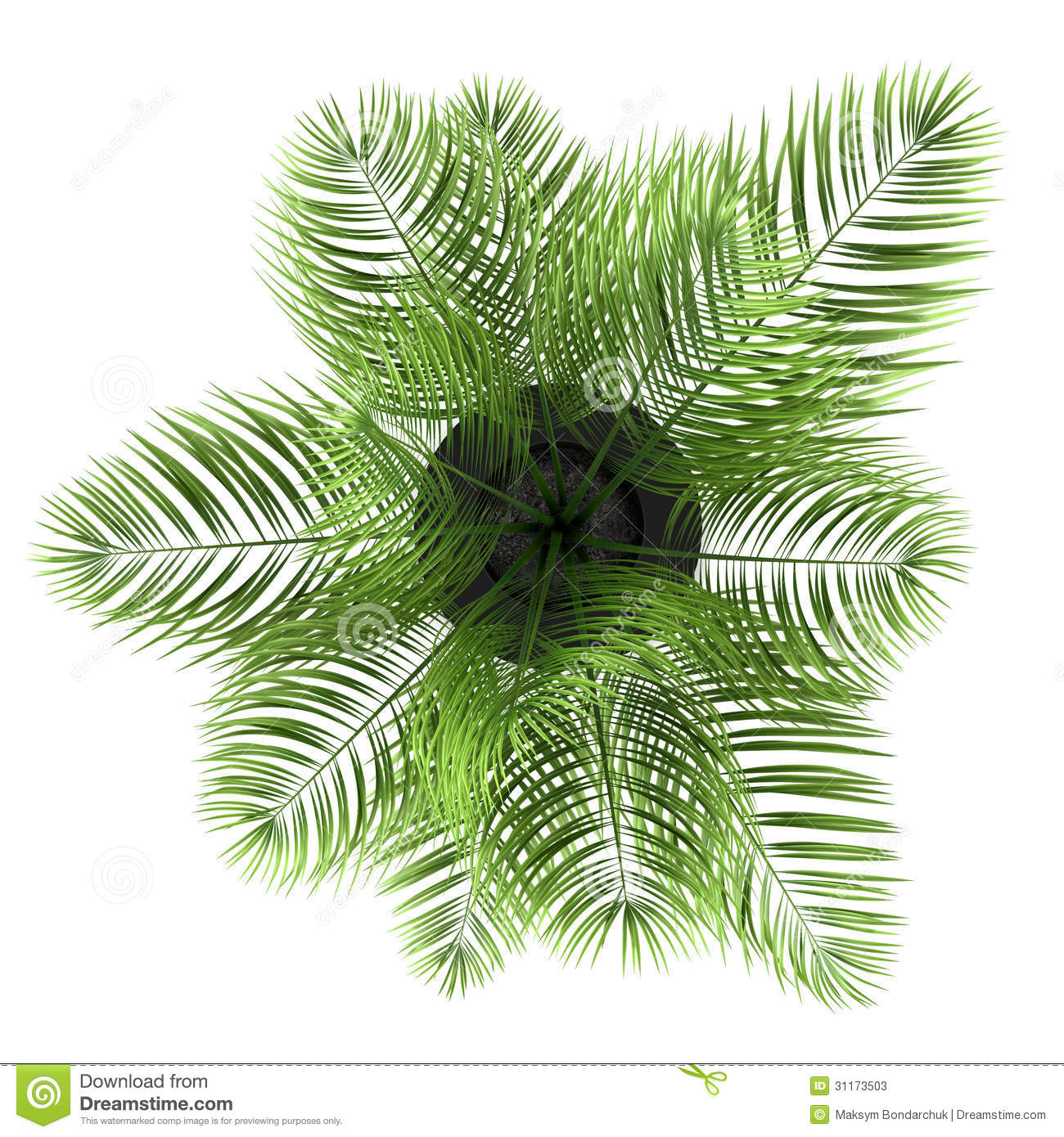 Top View Of Palm Tree In Black Pot Isolated On White Stock