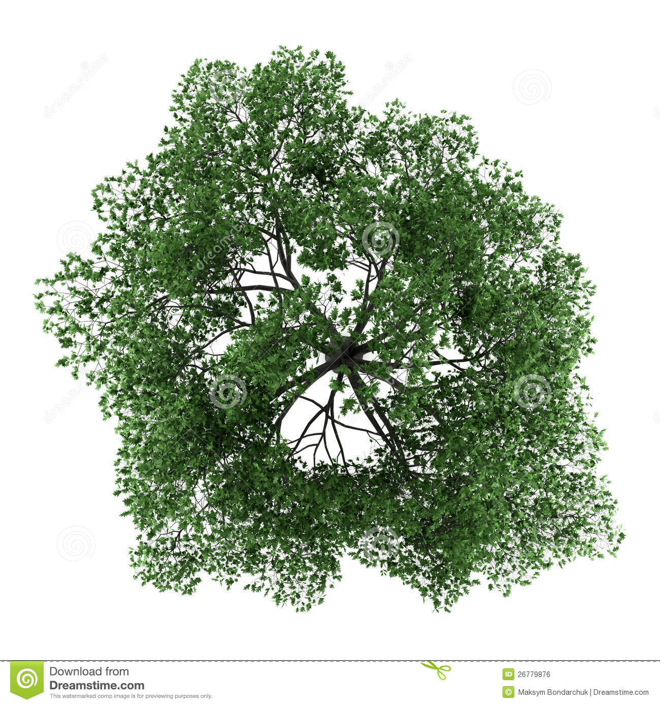 Tree isolated. quercus top stock images image: 35415464