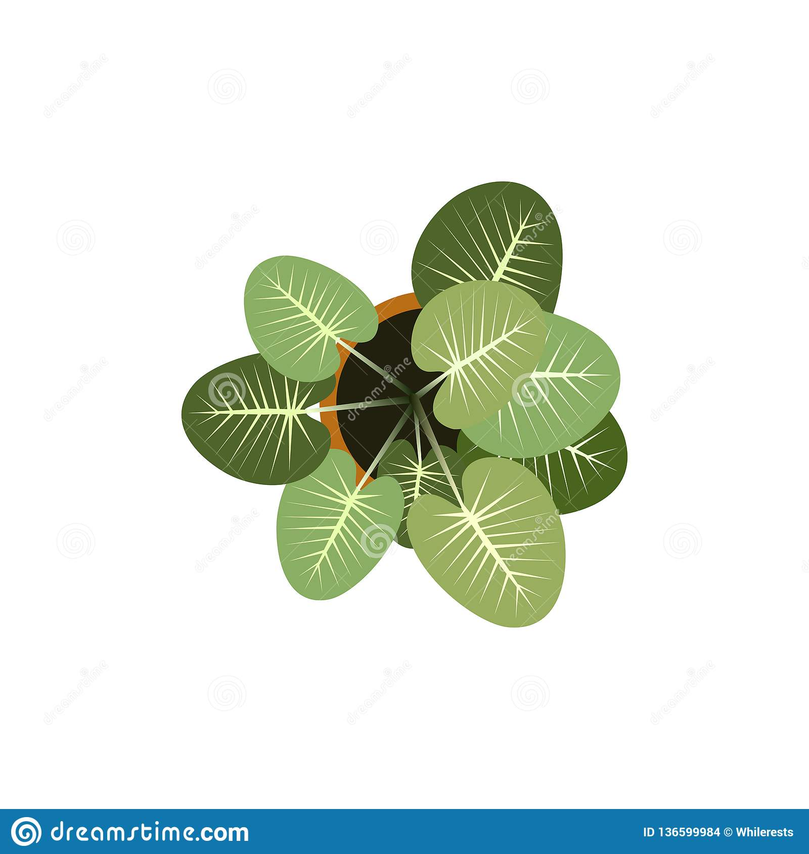 Top View Plants Easy Copy Paste In Your Landscape Design Projects Or Architecture Plan Isolated Flowers On White Stock Vector Illustration Of Landscape Isolated 136599984