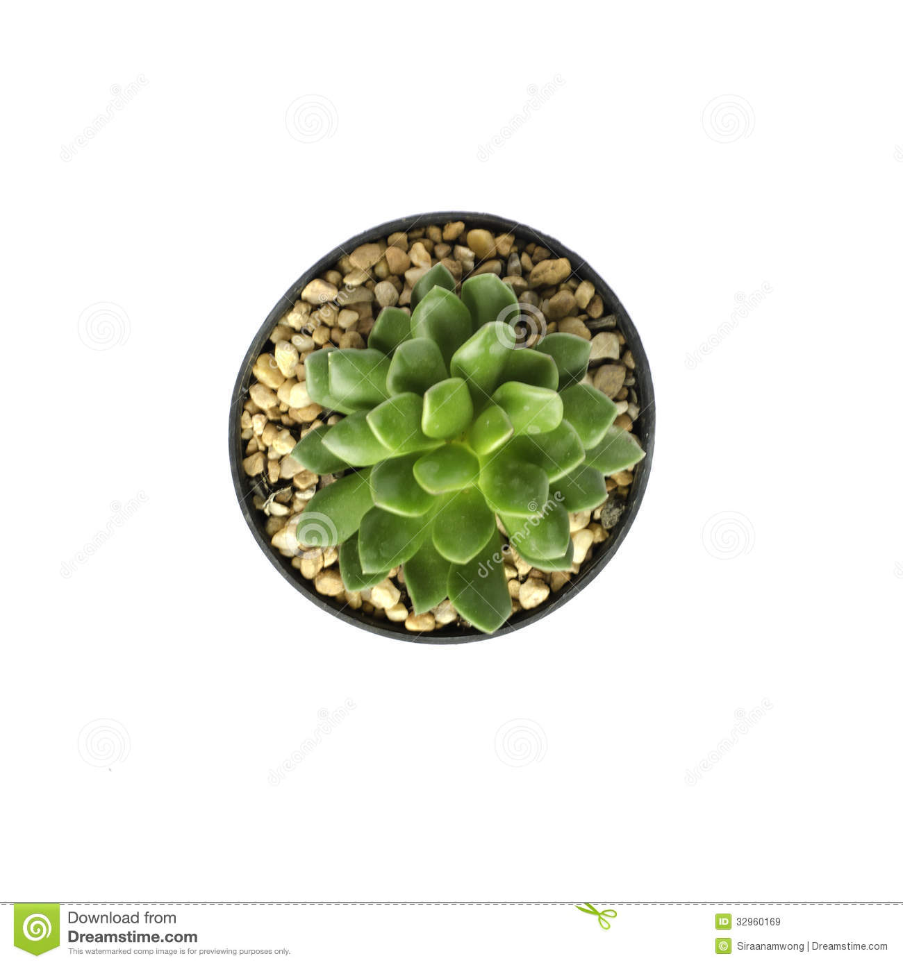 Top View Of Potted Cactus Royalty Free Stock Images