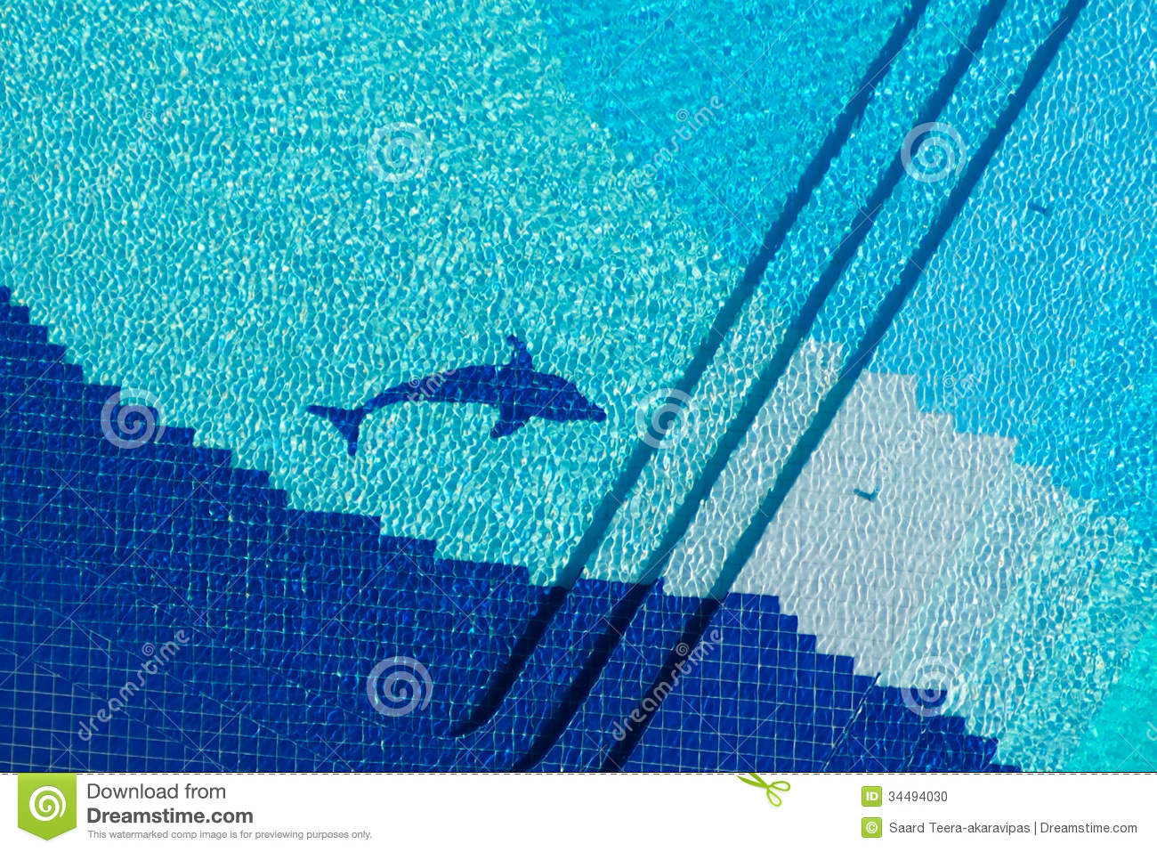 Top View Swimming Pool Stock Photo Image Of Healthy