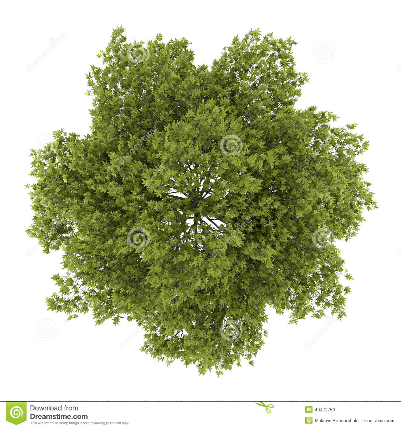 top view of white ash tree isolated on white stock birch tree vector pattern birch tree silhouette vector