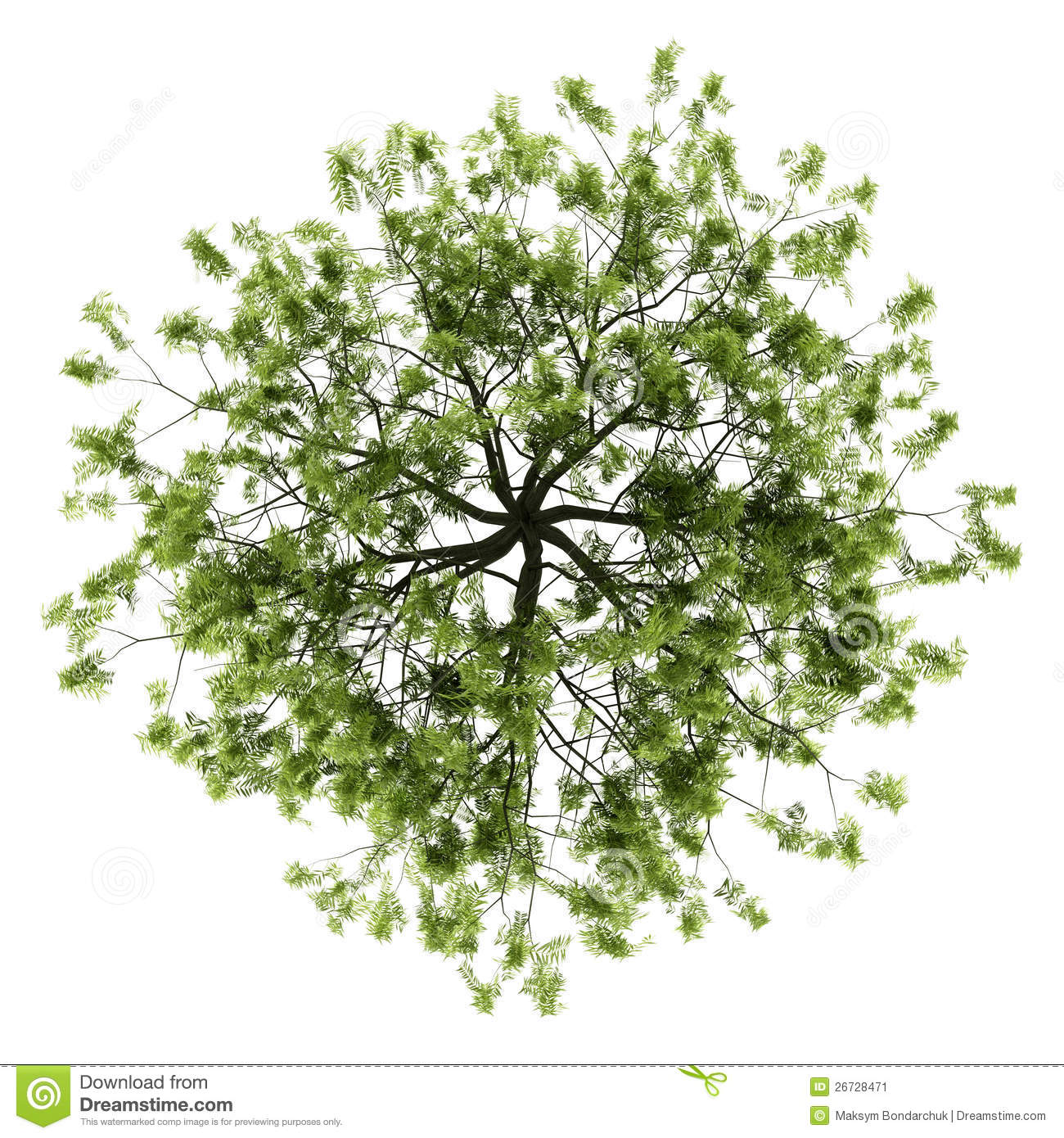 Top View Of Willow Tree Isolated On White Stock Image - Image ...