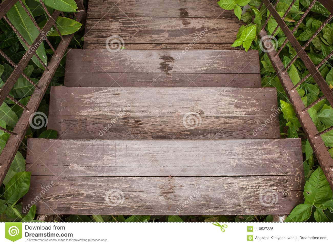 Wooden stairs or walkway go down to outdoor garden surrounded with green trees.