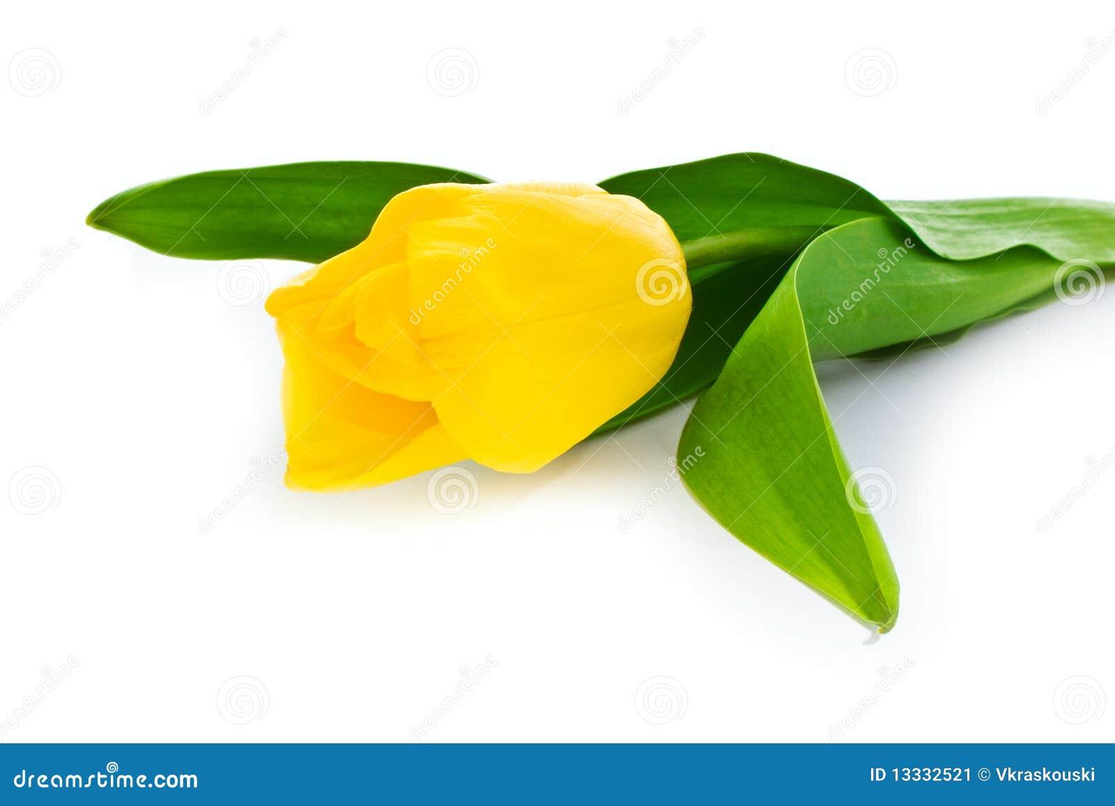 Topazowy tulipan