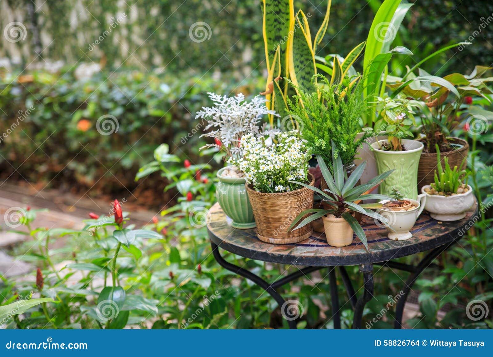 Topfpflanzen garten - Topfpflanzen garten ...
