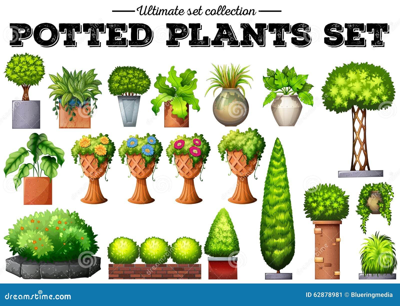 Topfpflanzen im garten vektor abbildung illustration von abbildung 62878981 - Topfpflanzen garten ...