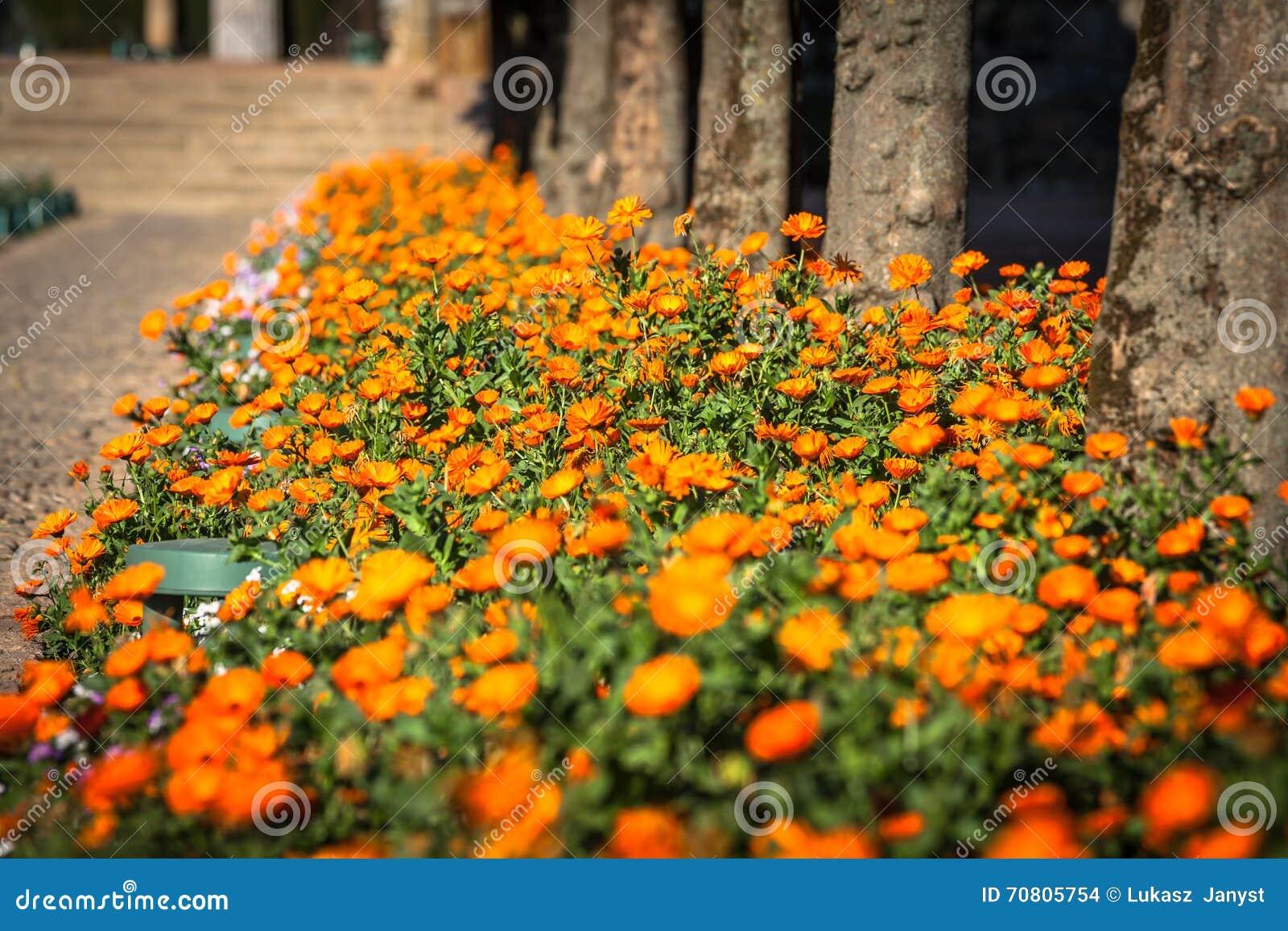 Download Topfpflanzen Und Blumen Auf Den Straßen Von Cordoba, Spanien  Stockfoto   Bild Von Haus