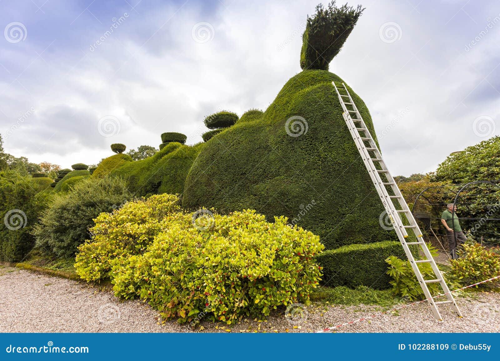 Topiary Care Stock Image Image Of Bush Park Gardening 102288109