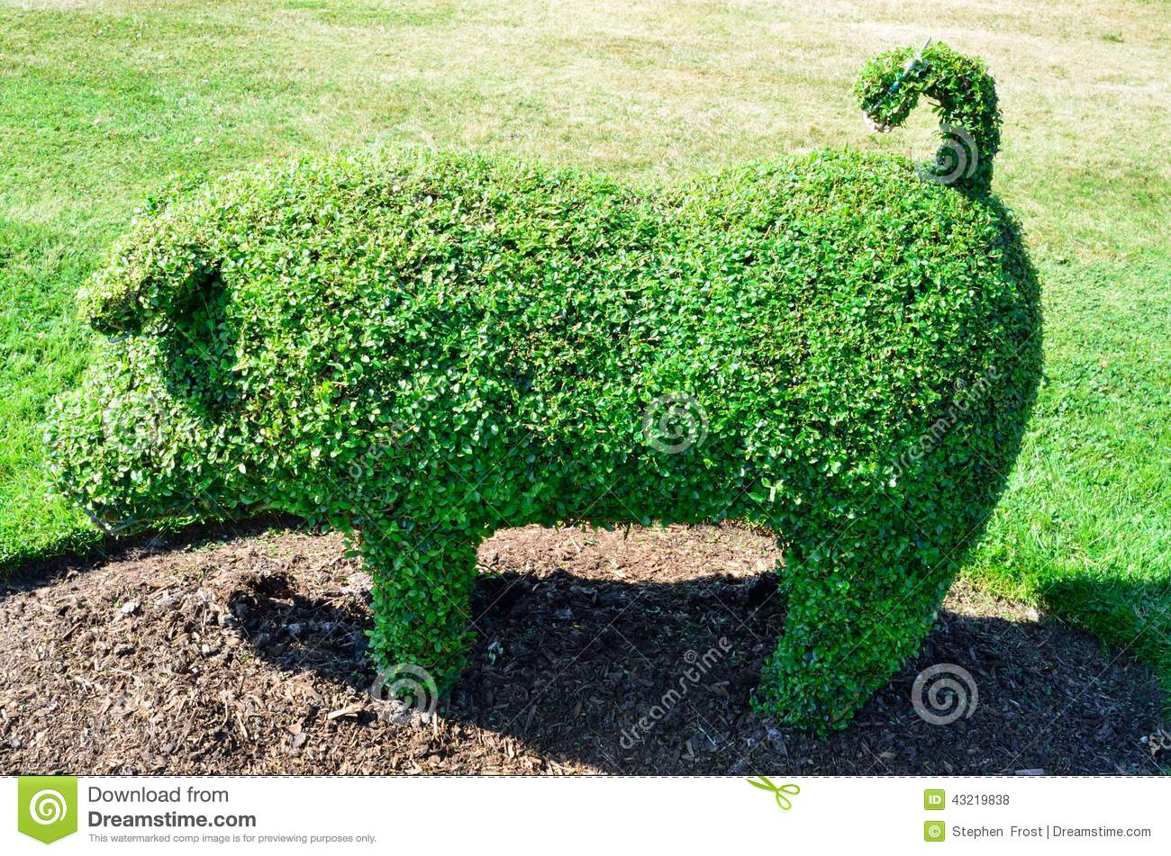 Topiary Pig From An English Garden Stock Photo Image