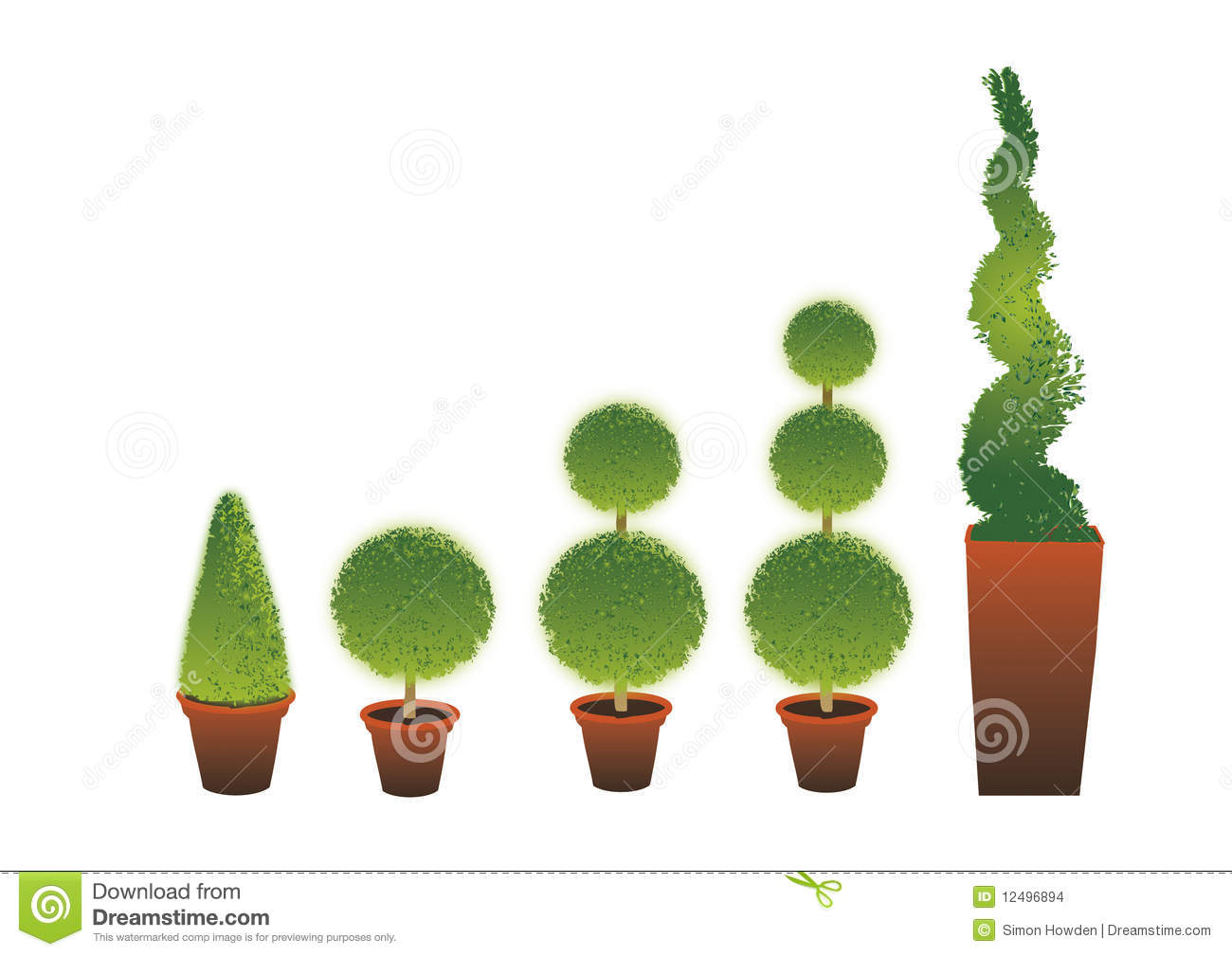 row of different shape Topiary shrubs set in terracotta pots set on ...