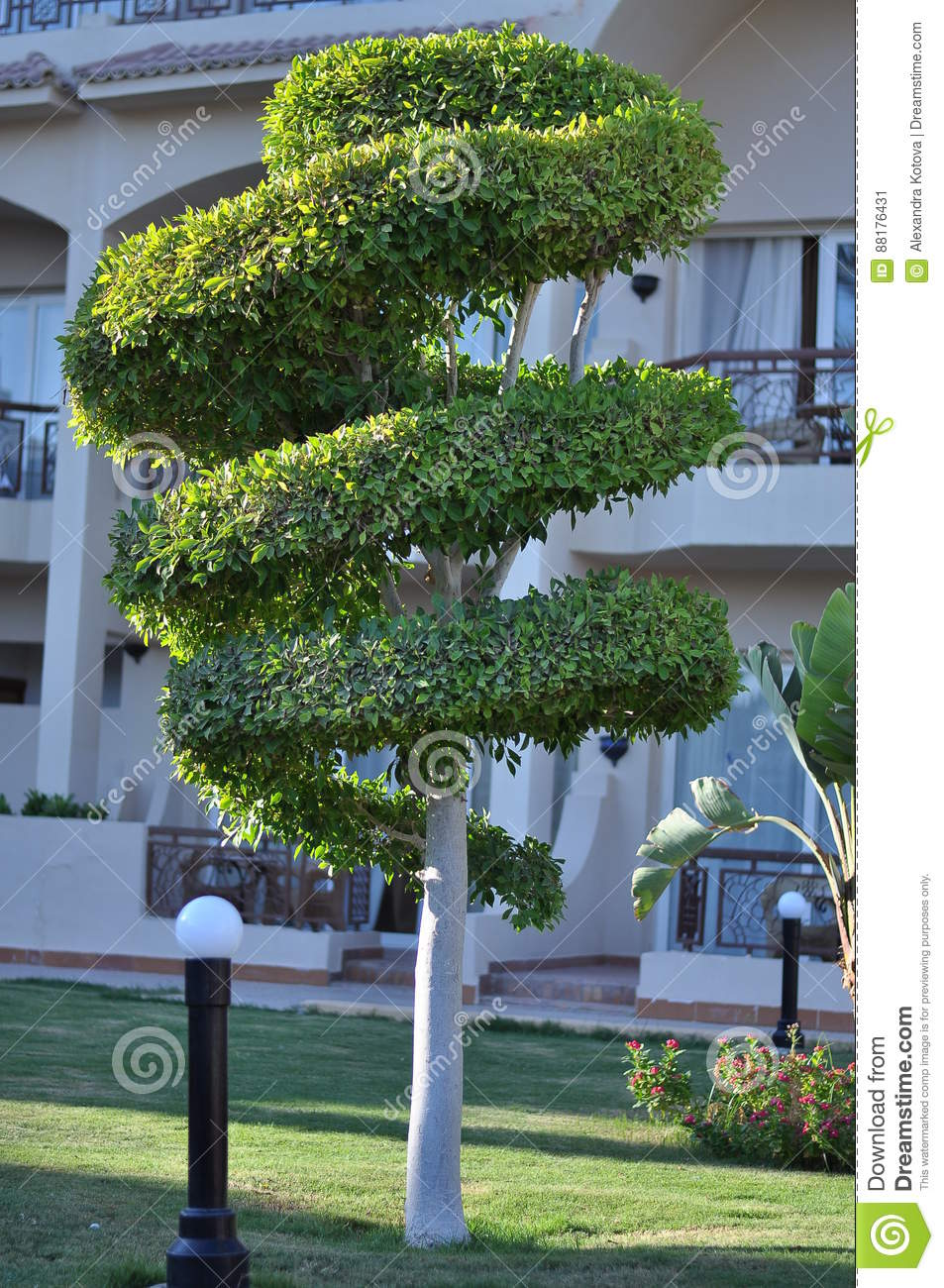 Design Green Landscapes: Topiary Spiral Formed Tree Stock Image. Image Of Shaped