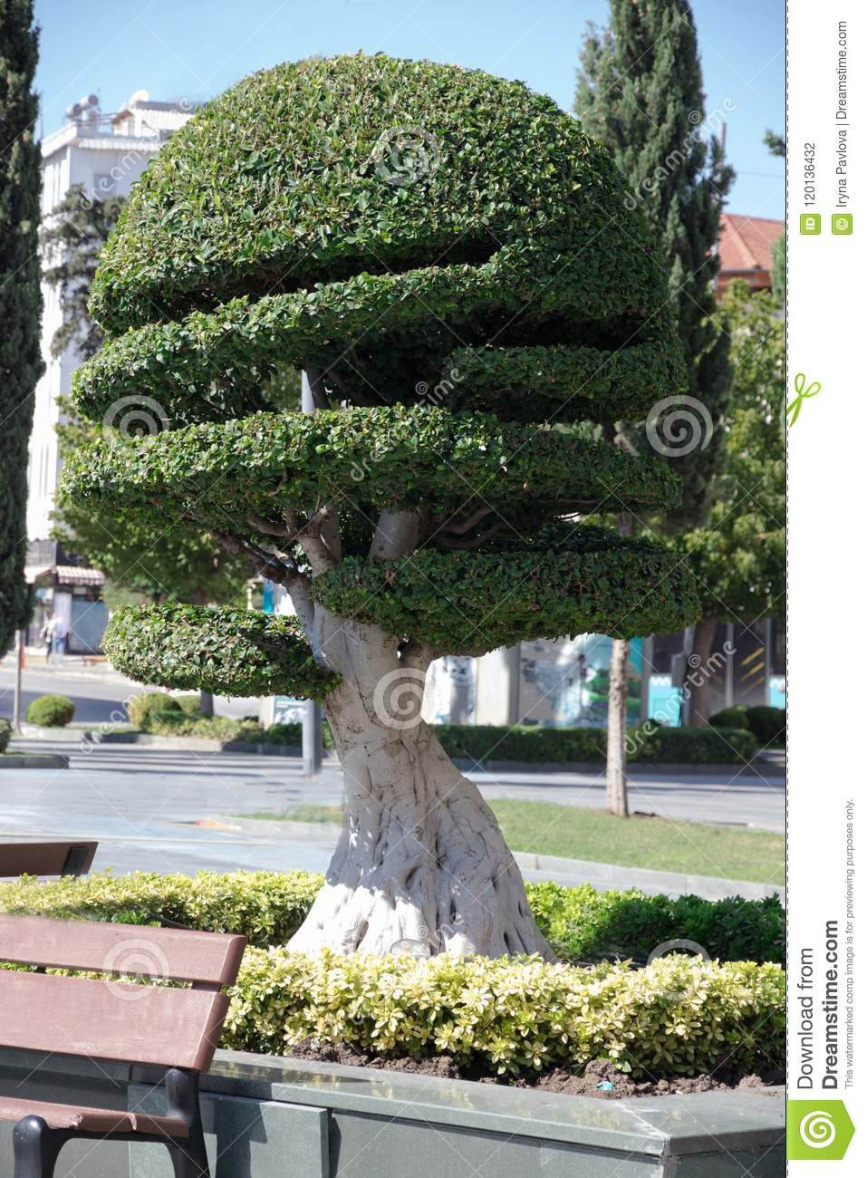 Topiary Tree Beautifully Cut Cypress Stock Photo Image Of Beautiful Garden 120136432