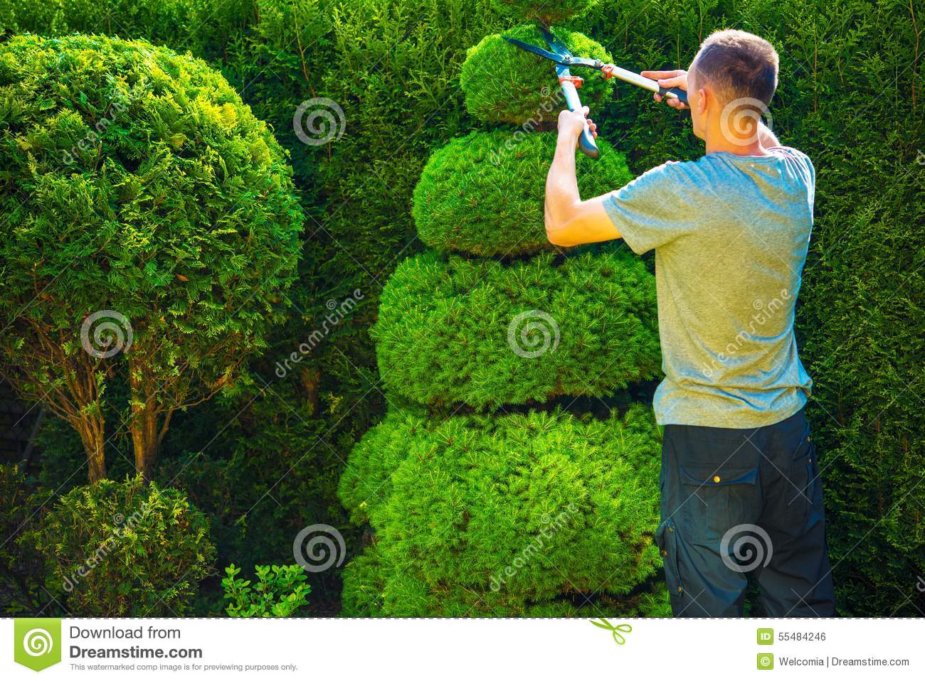 Topiary Trimming Plants Stock Photo Image 55484246