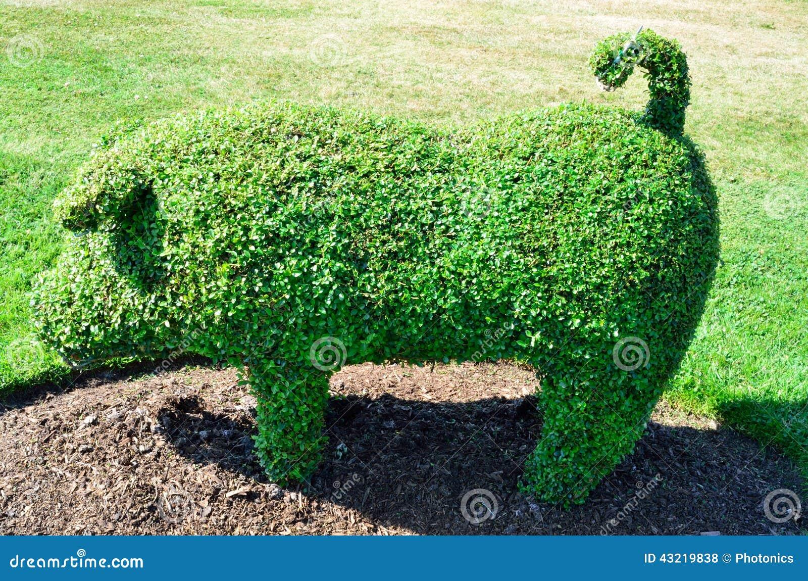 Topiary Varken van een Engelse Tuin