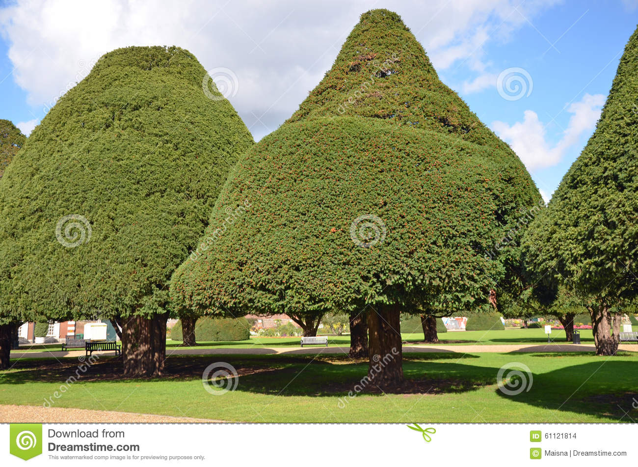 Topiary Yew Trees Stock Photo Image Of Topiary Hedge 61121814