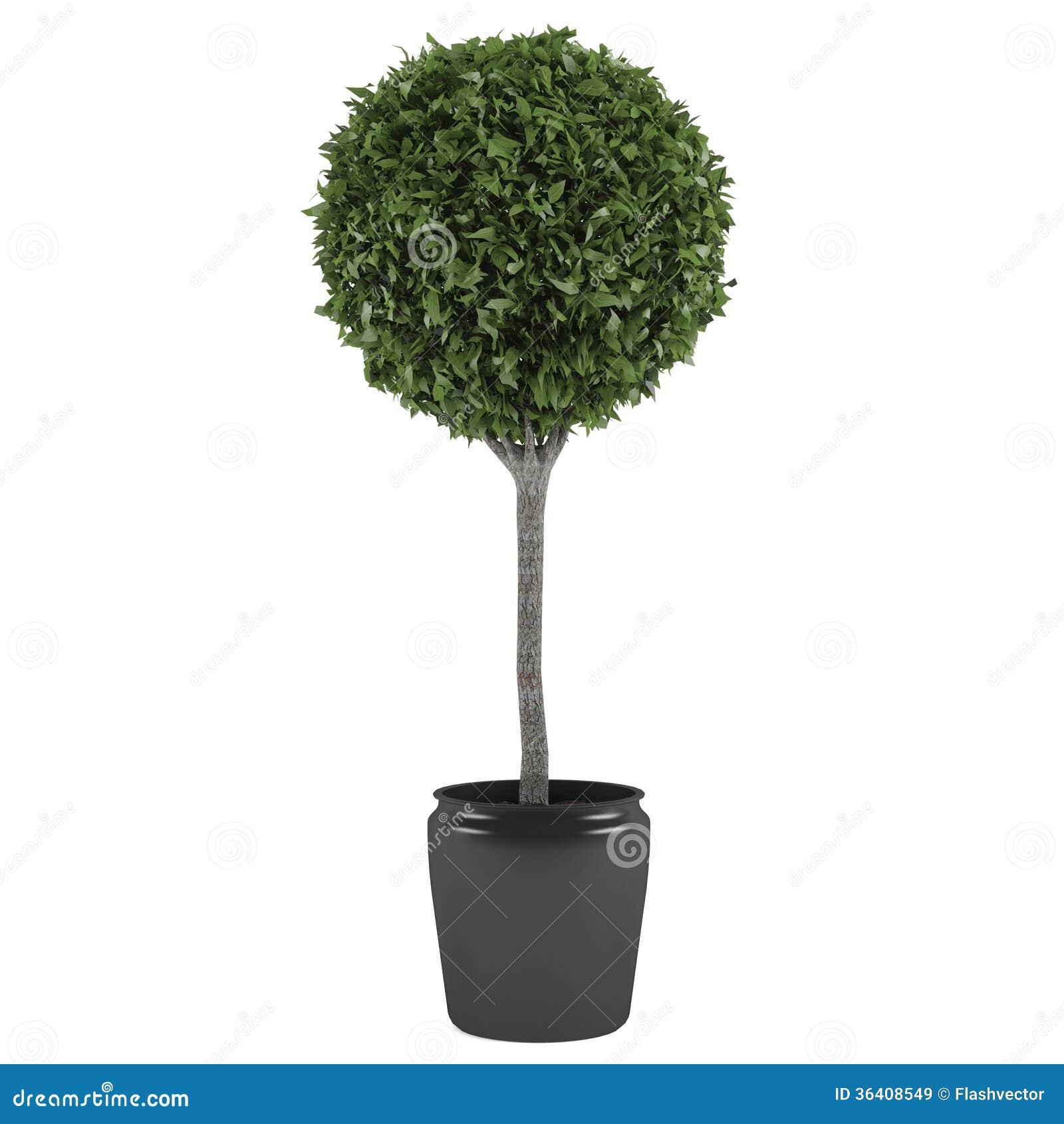 Topiarybaumtopf