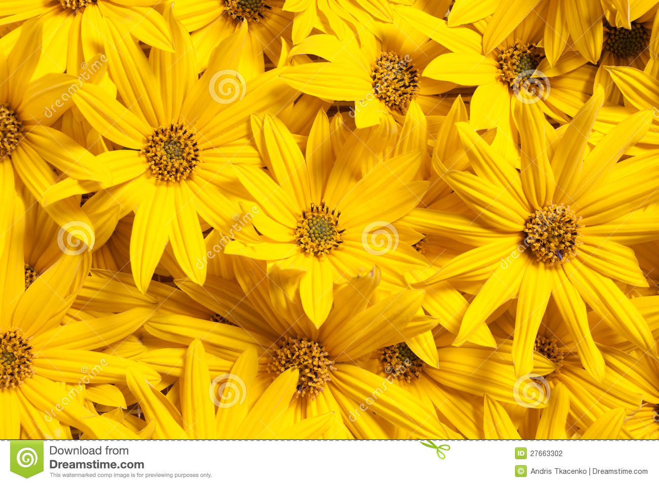 Topinambour flowers background