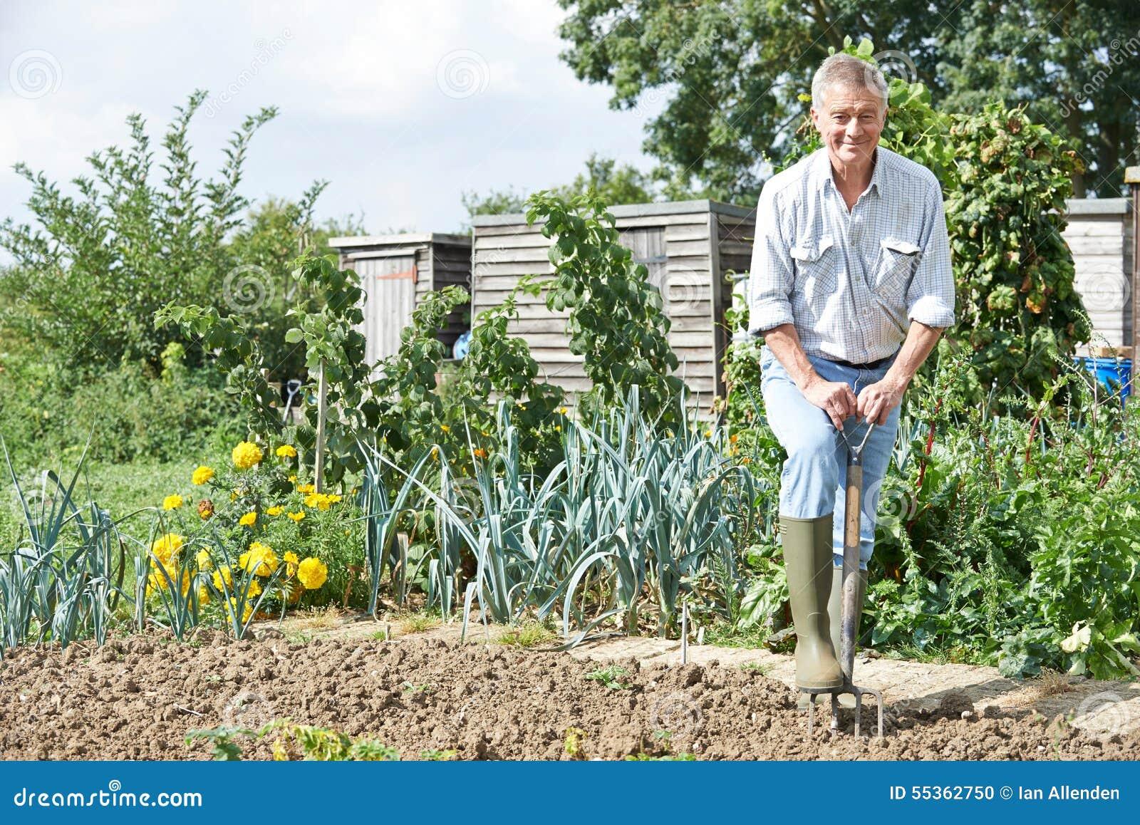 Toppa di verdure di scavatura dell uomo senior su assegnazione
