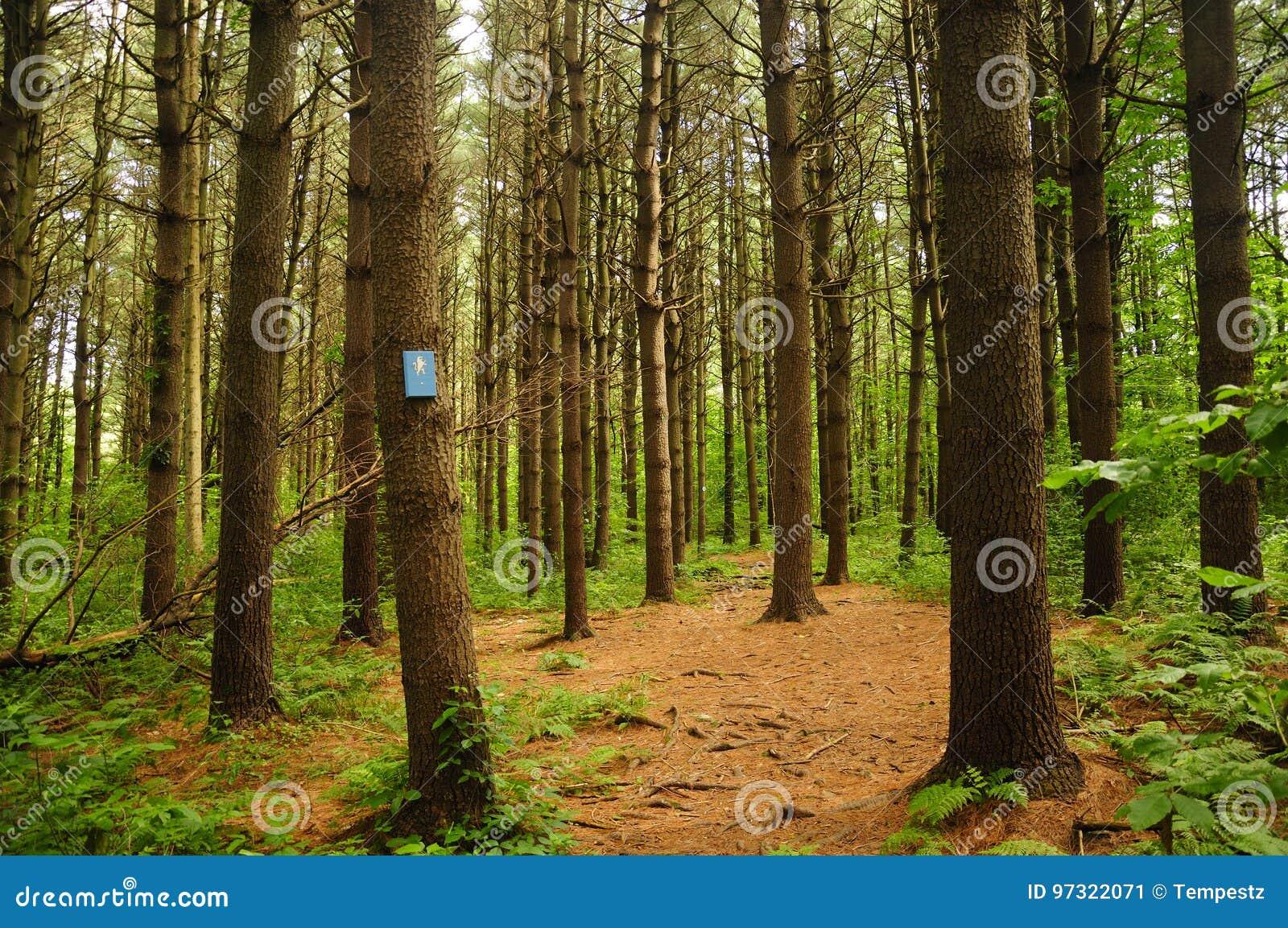 Topsmead状态森林康涅狄格