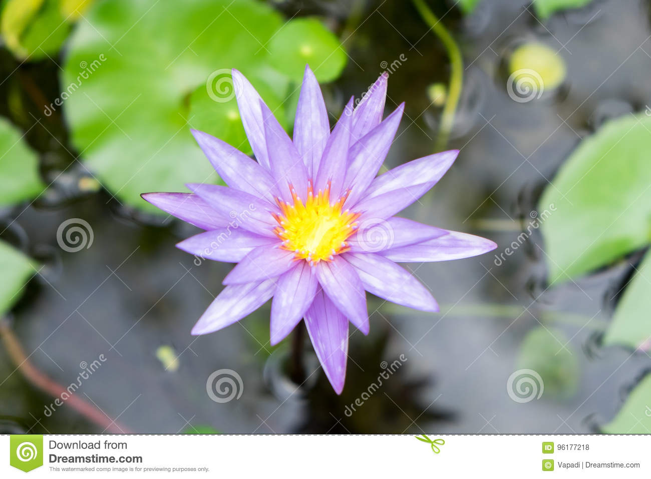 Topview of lotus flower stock photo image of bloom saturated download topview of lotus flower stock photo image of bloom saturated 96177218 izmirmasajfo