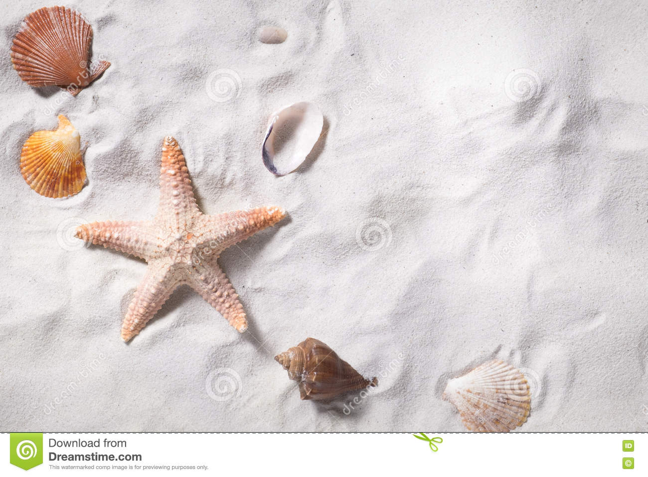 Topview of sea shells with sand beach as background and copyspace.