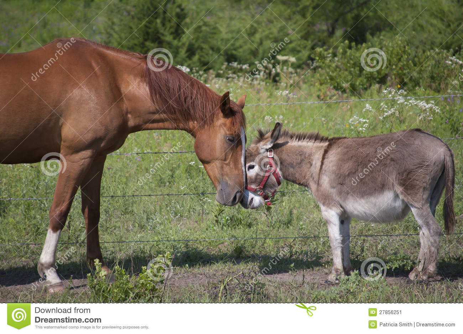 Toque do cavalo e do asno