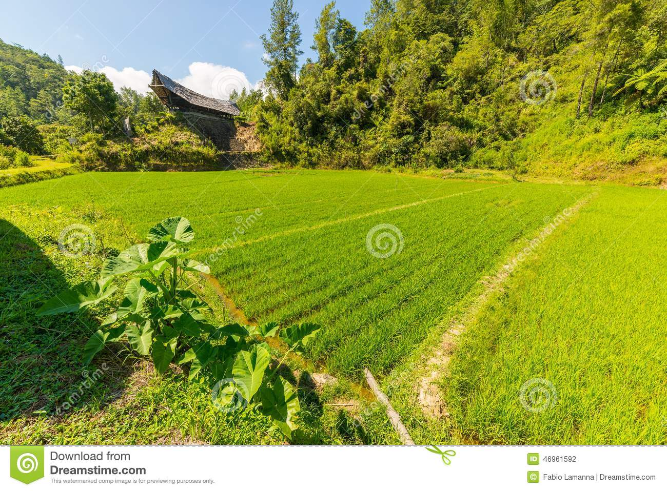Download Toraja Traditional Culture And Life Stock Photo - Image of landscape, decoration: 46961592