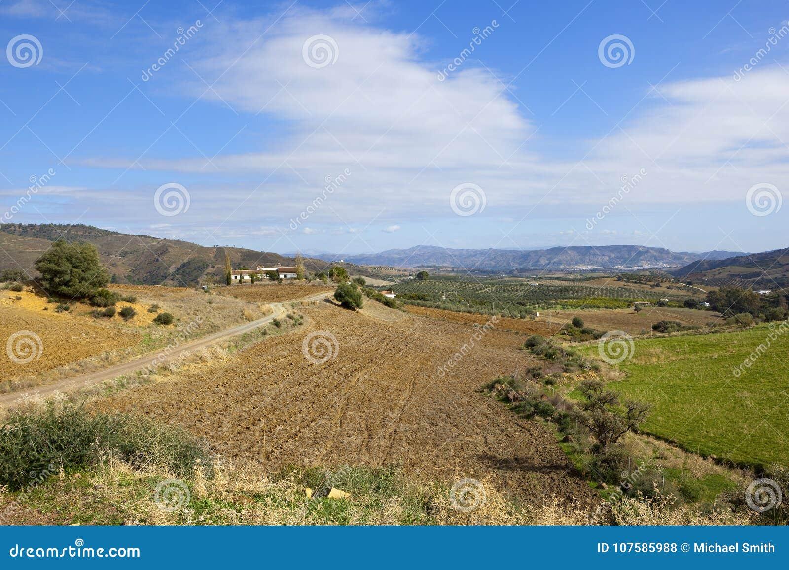 Torka fält och olivgröna dungar av Andalusia