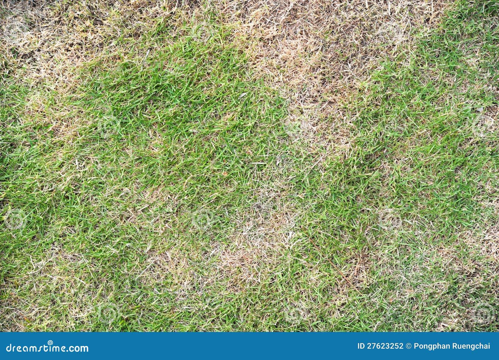 Torka gräs