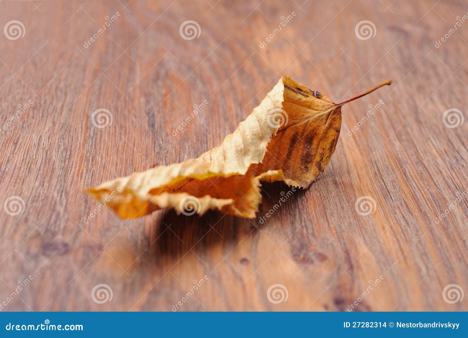 Torkad leaf på tabellen