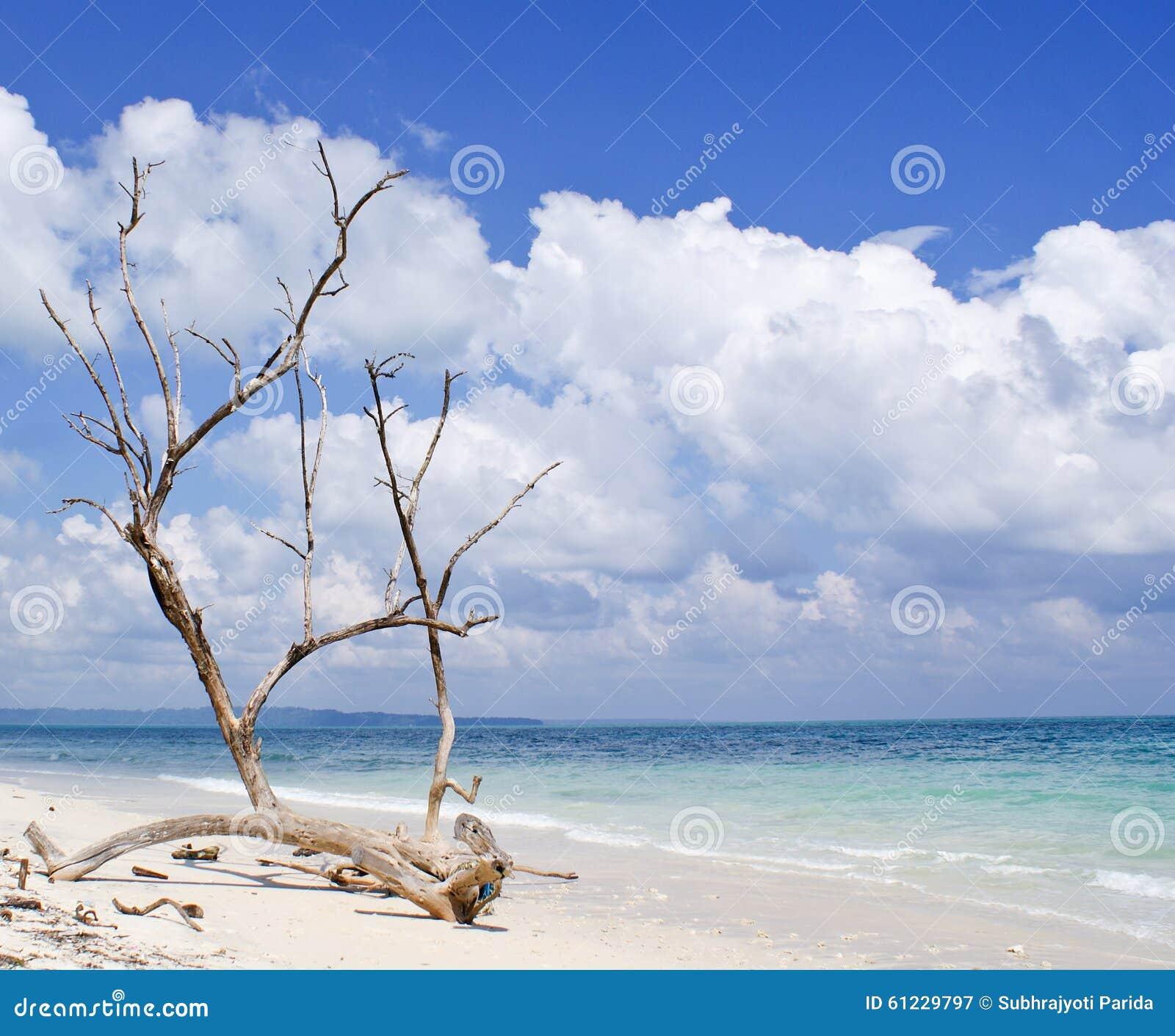 Torkad trädstam med kala filialer på bakgrunden av det blåa havet