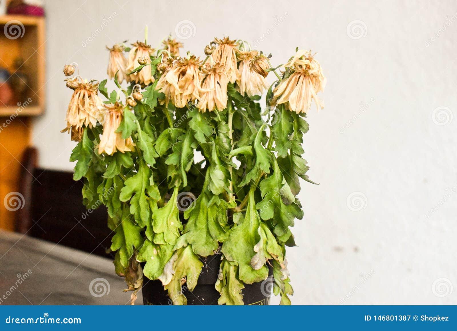 Torkade blommor i vasen