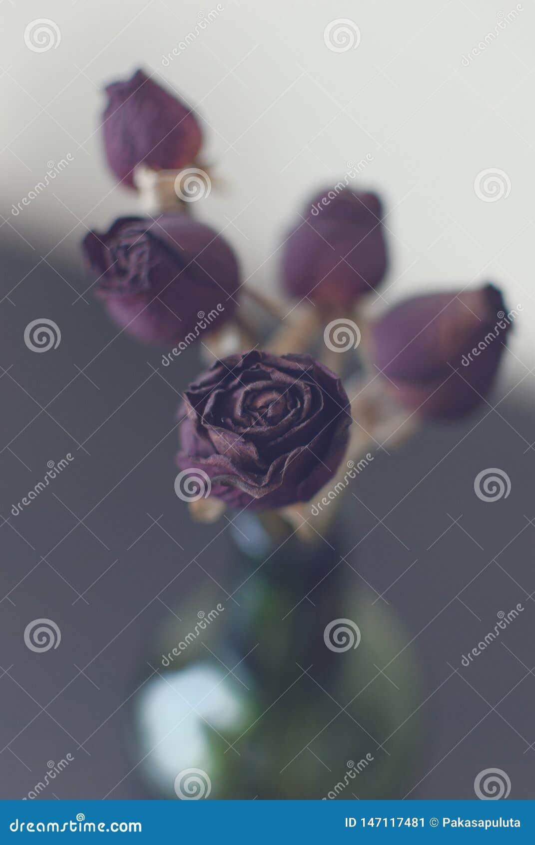 Torkade rosor 1